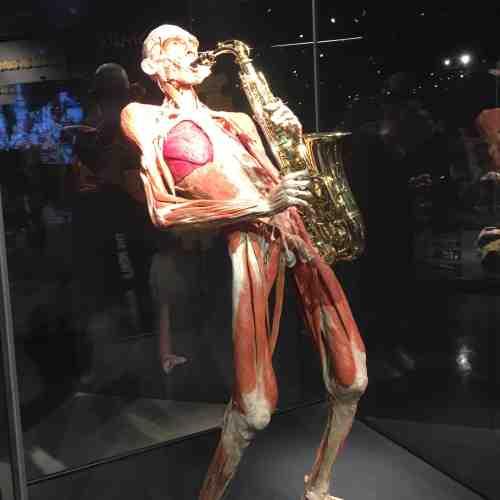 Ausstellung Body Worlds